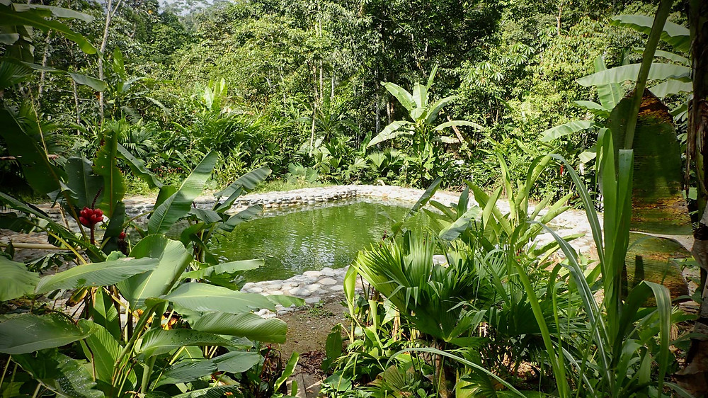 Natural pool with lush surroundings in Macoa