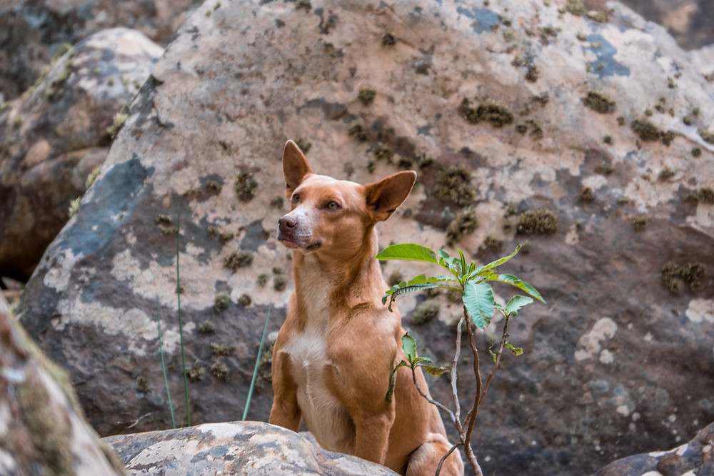 Our camp dog, La Pacha waterfall, Bolivia - AvVida.co.uk