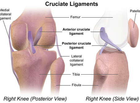 Looking After Your Knees : What? Why? How?