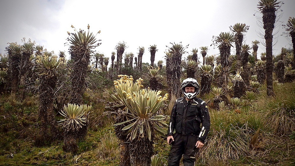Huge plants on high road out of El Cocuy