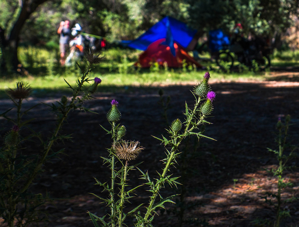 Camping in San Jose de Jachal among the thistles - AvVida.co.uk