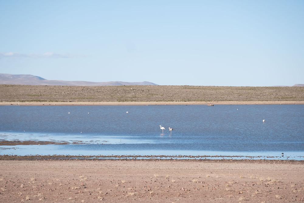 Flamingos in the lake - AvVida.co.uk