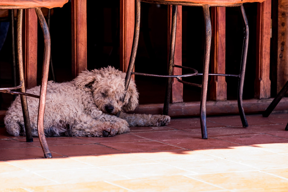 Sleeping dog at a bar - AvVida.co.uk