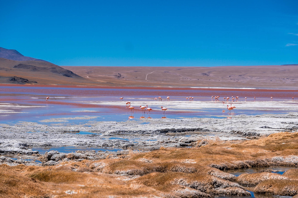 Flamingos in Laguna Colorada, Lagunas route  - AvVida.co.uk