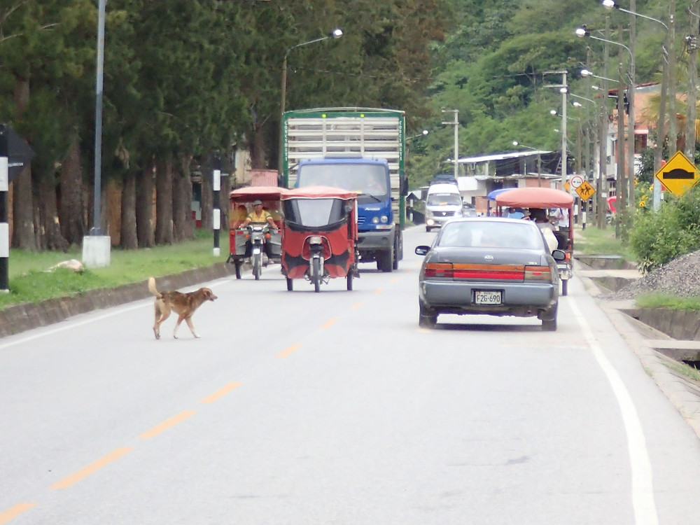 Tuk-Tuk's and street dogs, plus crazy drivers!!! Photo by Suzie Bostock.