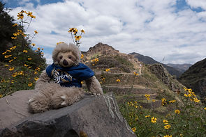 AvVida.co.uk - Cyril the Sloth in Peru