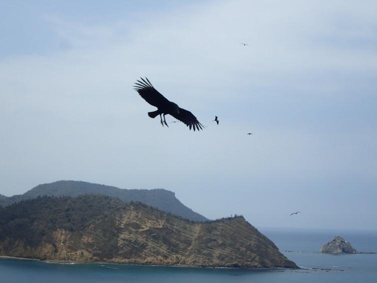 Bird watching at Los Frailes Mirador