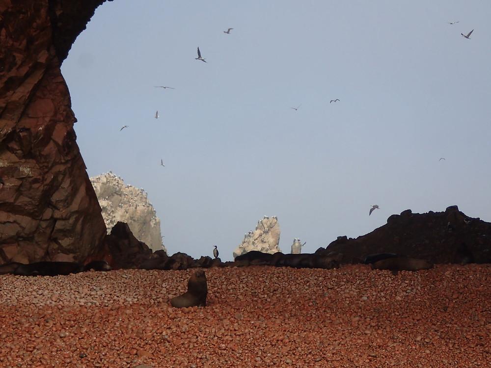 Wildlife on the Ballestas islands.