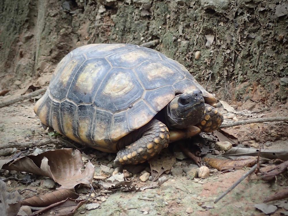 Mr Tortoise.