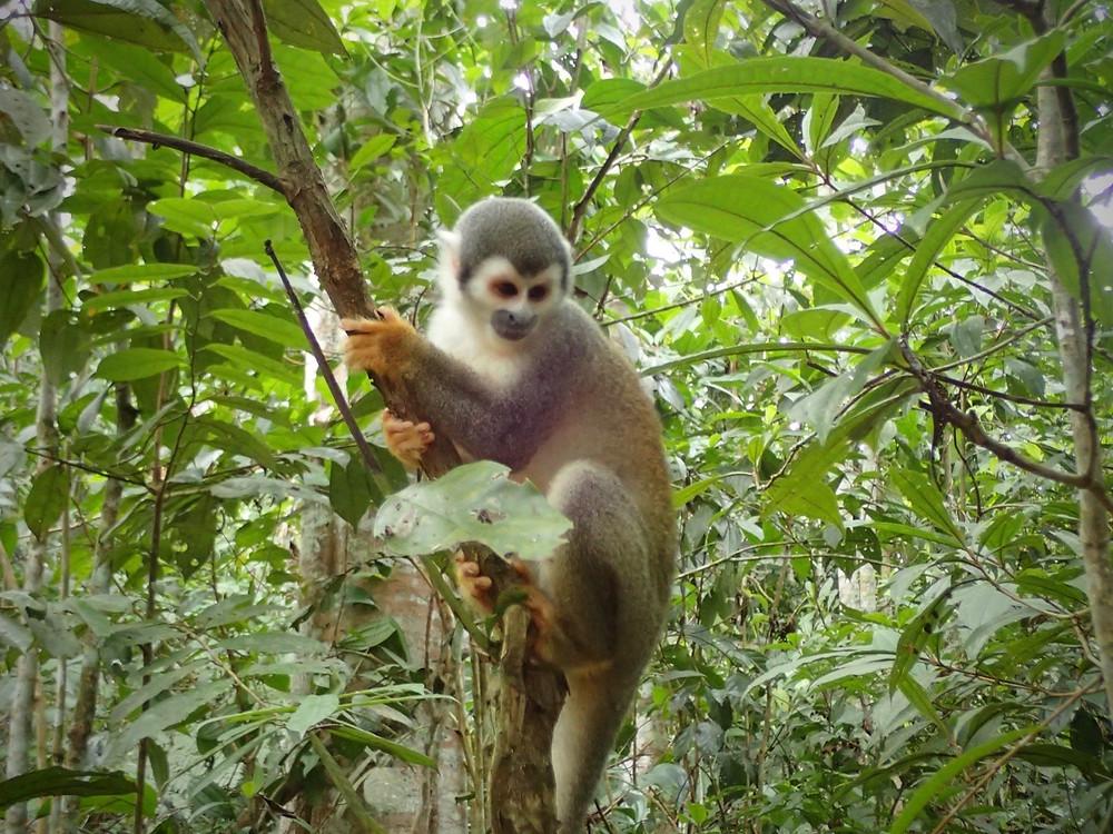 Mr Monkey!