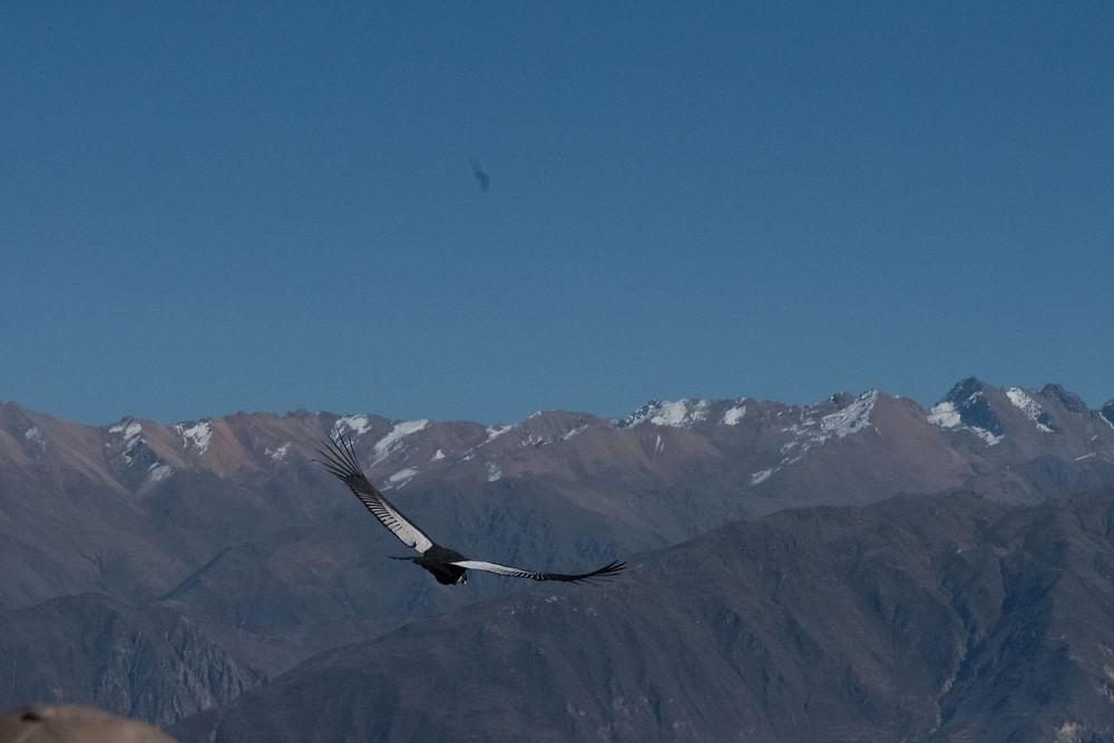 Another stunning Condor - AvVida.co.uk