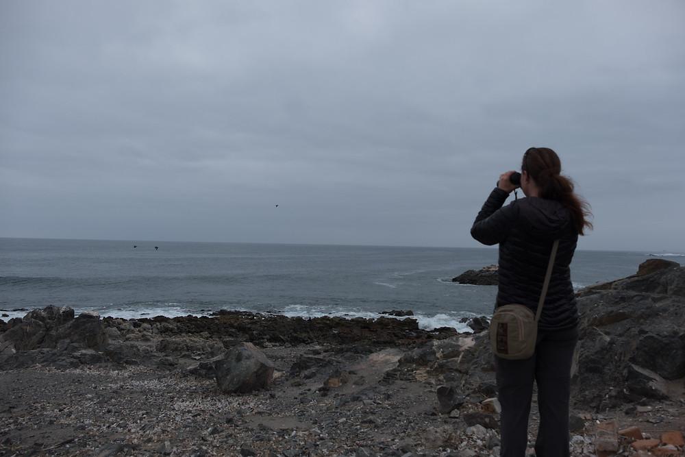 Me looking at penguins, Punta Coles, Peru - AvVida.co.uk