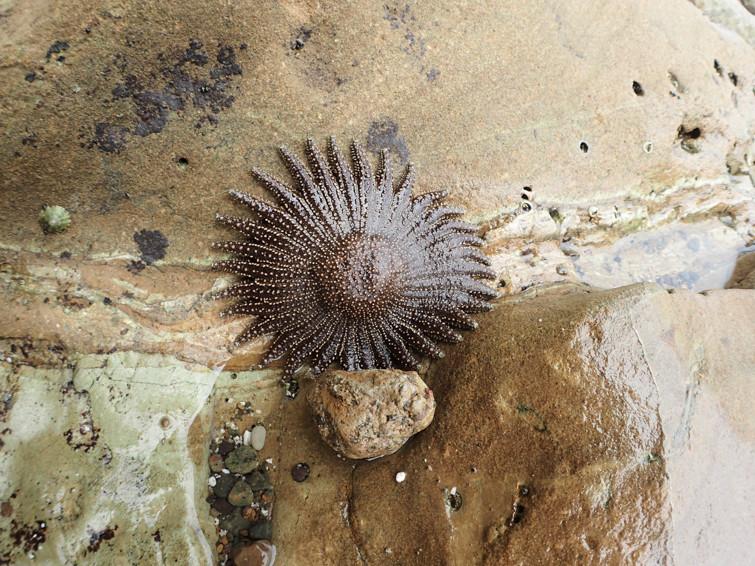 Very interesting star fish like creature.
