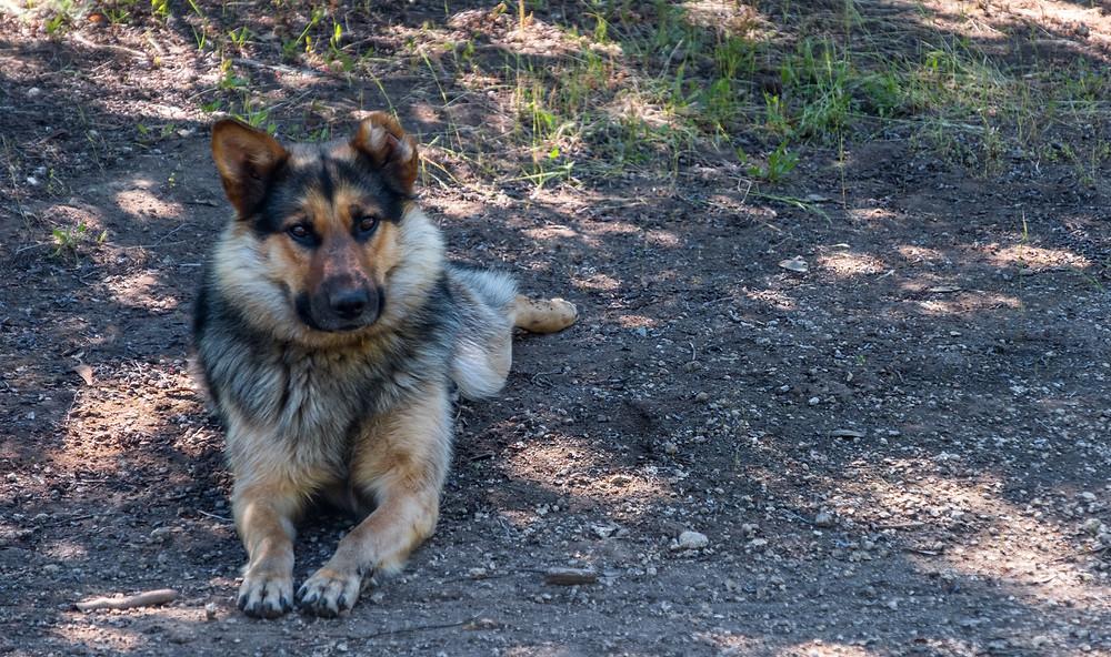 Our camp dog  - AvVida.co.uk