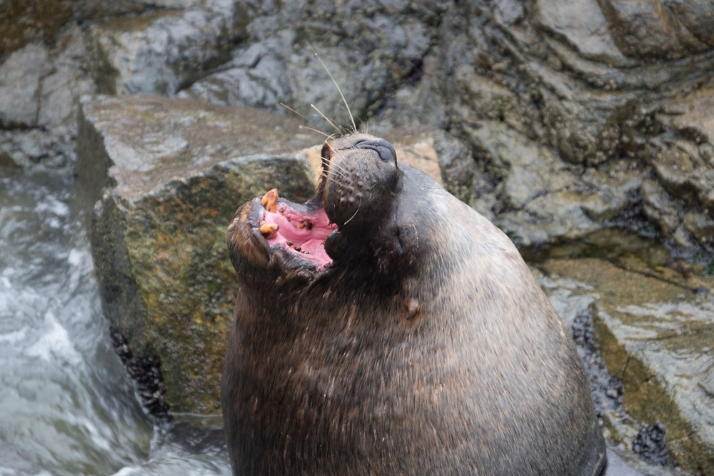 Happy seal, Ilo, Peru - AvVida.co.uk