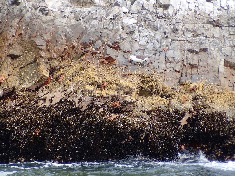 The rocky shore wildlife.