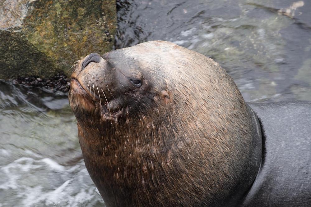 Mr seal - AvVida.co.uk