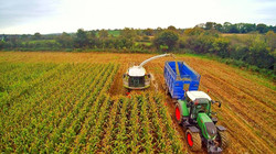 Maize Harvesting