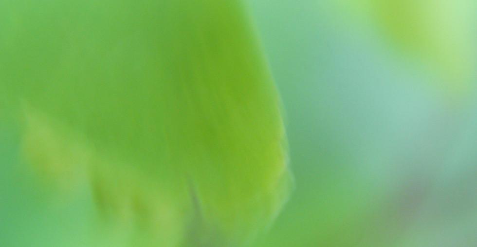 グリーン 背景 ノスタルジー.JPG