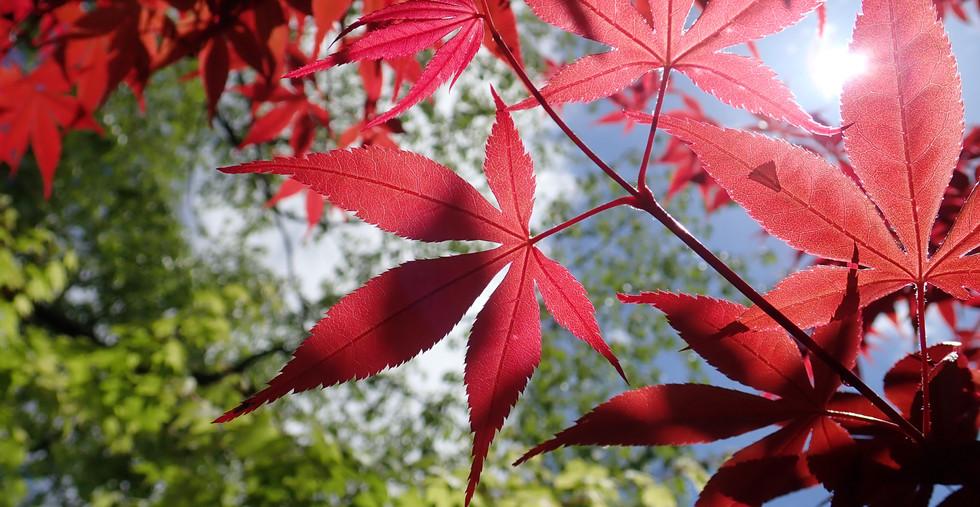 紅葉、赤緑.jpg