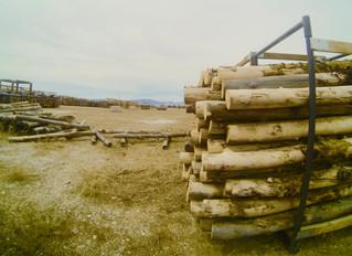 Custom Furniture and Lumber Selection