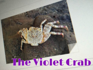 The Violet Crab