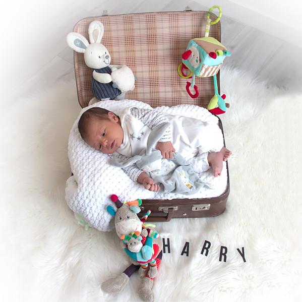Harry_0066.jpg