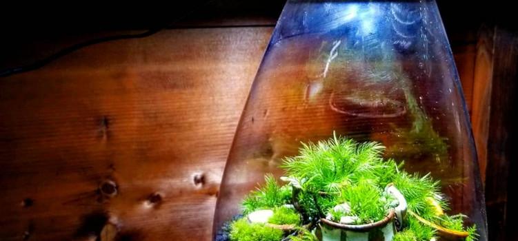 Mosslight × mossmaileコラボ.jpg