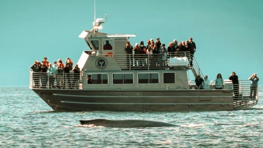 Whale Watching and Glacier Combo
