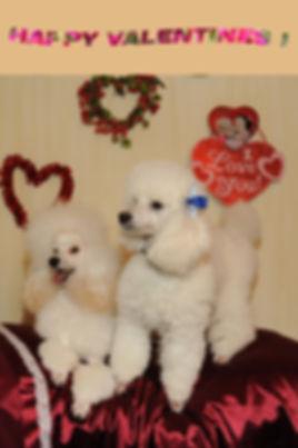 Alfie & Neige Valentine card_6471s.jpg