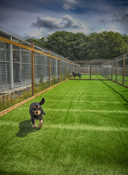 outdoor treatment pen with spaniel.JPG