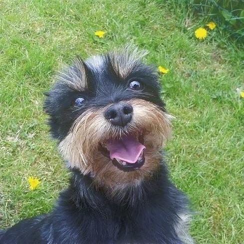 A happy boarder!