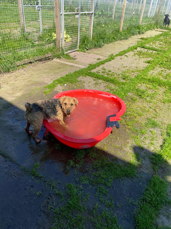 Play Time In Paddling Pool