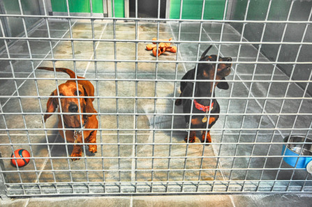 Deluxe Kennel Area