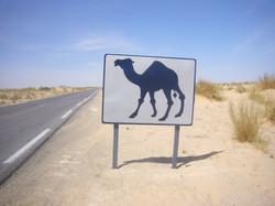 signalisation saharienne