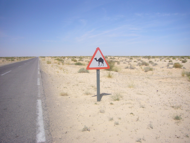 signalétique saharienne