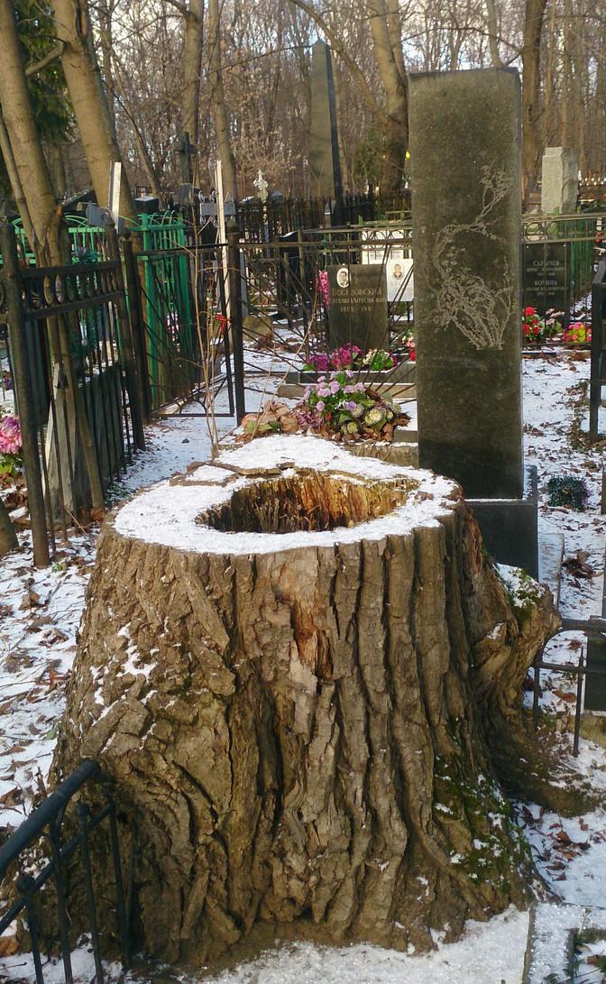 Дерево и камень