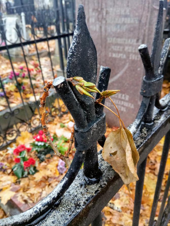 Осень на Даниловском кладбище
