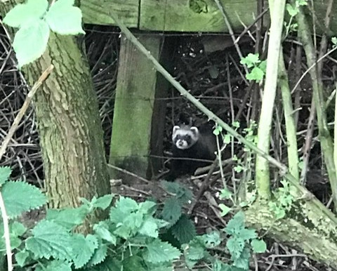 Furry Visitor to Forest School