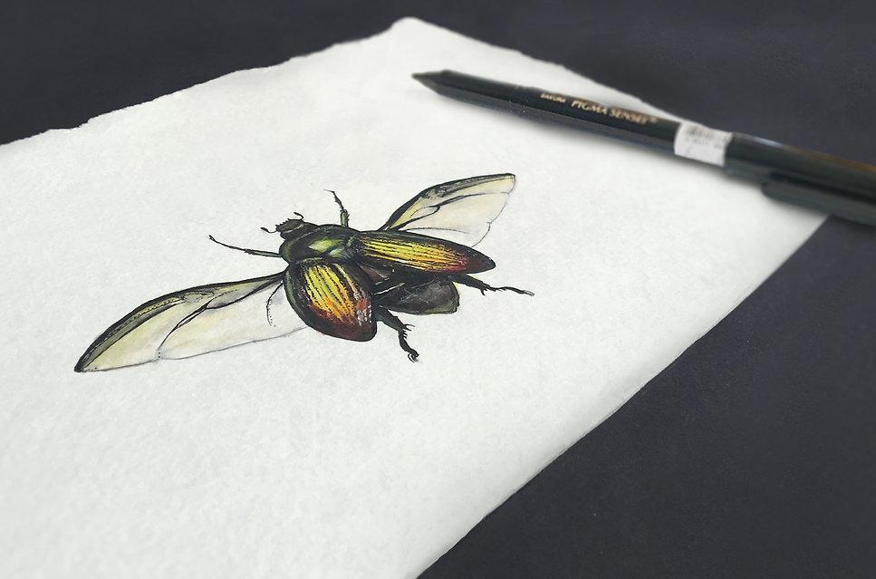 bug sketch mock.jpg