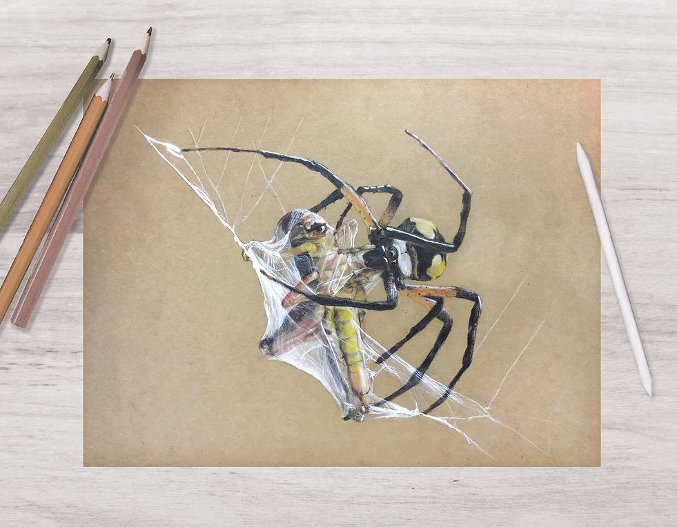 spider mock.jpg