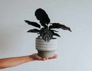 FIVE THINGS TO DO WHEN YOU BRING A PLANT HOME