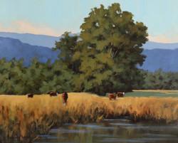 Boone Pasture