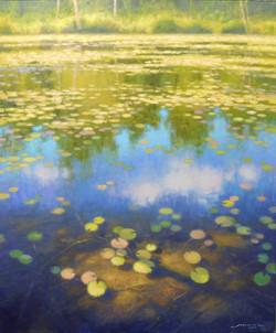 Bass Lake Waterlilies