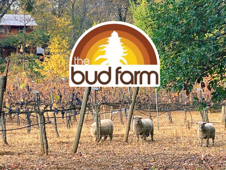 Chemistry Visits: Finding New Life On An Old Vineyard At Bud Farm