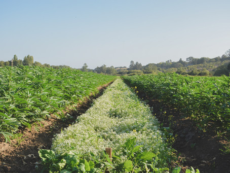 Chemistry Visits: Santa Cruz's Cultivation Legacy is Alive & Well At Coastal Sun Farms.