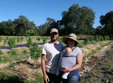 Chemistry Visits: Sustainability Takes Root at Radicle Herbs