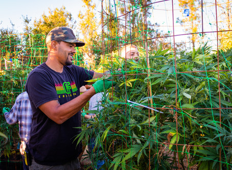 Chemistry Visits: Esensia Farms, Where Oakland Roots Run Deep.