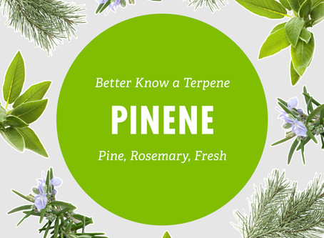 Better Know a Terpene: Pinene