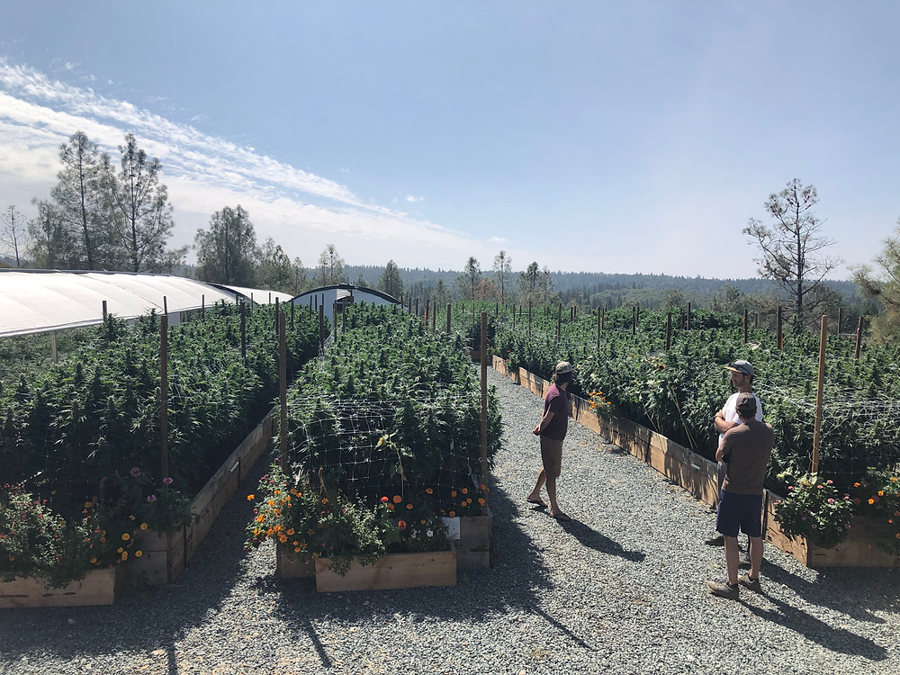Foothill River Farms